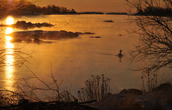 Early winter morning. Scenic sunrise at the coast in wintertime with some birds in the open water royalty free stock photo