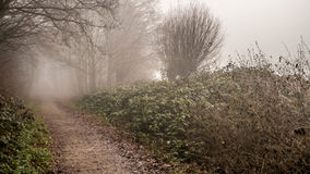 Early winter morning fog on forest path. Ending in invisible distance winter foliage Stock Photography