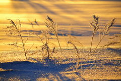 Early winter morning. In the early winter morning the sun rises over the steppe Stock Photography