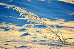In the early winter morning. The sun rises over the steppe Stock Photography