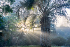 Early winter morning in Uruguay Stock Photography