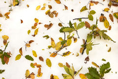Early winter natural background Royalty Free Stock Photography