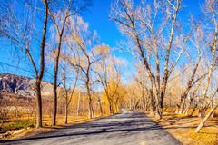 Early winter scene in the Northern China Royalty Free Stock Photos