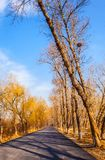 Early winter scene in the Northern China Royalty Free Stock Photography