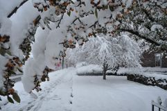 Early Winter Snow Storm in Pennsylvania Stock Images