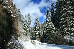 Early Winter Snows On Conifer Trees. Heavy early snows covered conifer (pine) trees making a beautiful winter scene.  Would be good on greeting cards. Winter in Royalty Free Stock Photography
