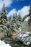 Early Winter Snows On Conifer Trees. Heavy snowfall on evergreens and shrubs along a mountain stream Stock Photography