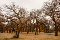 Early Winter Trees. These are trees during late fall at the Minnehaha Park in Minneapolis, Minnesota Stock Image