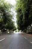Empty Tel-Aviv Street Stock Image
