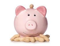 Earning peanuts piggy bank Royalty Free Stock Images