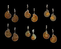 Earrings with ammonites. Various silver earrings with ammonites Royalty Free Stock Photo