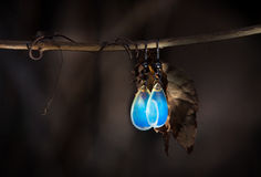 Earrings moonstone royalty free stock images