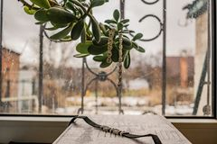 Earrings and necklaces, jewelry for girls. The view outside the window, a green plant. Fashion and style in grey tones. stock photos