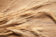 Ears of barley Royalty Free Stock Images