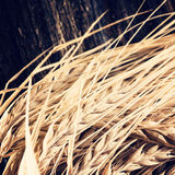 Ears of barley for brewing beer. Ears of barley on wooden background. Used for brewing beer stock photo