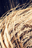 Ears of barley for brewing beer. Ears of barley on wooden background. Used for brewing beer royalty free stock photography