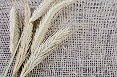 Ears of barley lying on sacking Royalty Free Stock Images