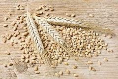 Barley. Ears Of Barley And Grain, On Wooden Background Royalty Free Stock Photo