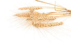 Ears of barley isolated on white Royalty Free Stock Photography