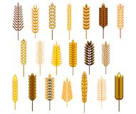 Ears of cereals and grains icons set Stock Images