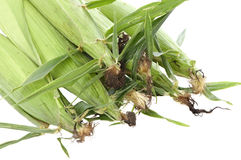 Ears Of Corn. View of pile of corn ears, white isolation Stock Image
