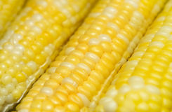 Ears of corn. Pot of boiling water and many ears of corn cooking Royalty Free Stock Photos