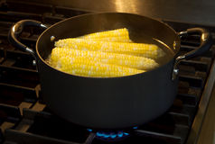 Ears of corn Stock Image