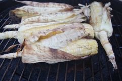 Ears of corn on the grill Royalty Free Stock Image
