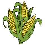 Ears of corn illustration. Corn cartoon; Isolated corn on the cob Stock Photo