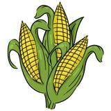 Ears of corn illustration Stock Photo