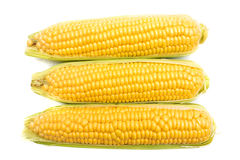 Ears of Corn Royalty Free Stock Photo