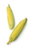 Ears of corn isolated Royalty Free Stock Photos