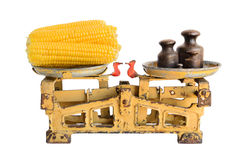 Ears of corn on old scales Royalty Free Stock Image