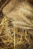 Ears of corn on sackcloth in haystack Stock Images