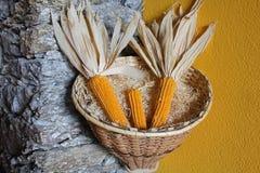 Ears of corn in a wicker basket. Some ears of corn in a wicker basket Stock Images