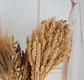Ears of different types of cereals: wheat, oats, rye. stock image