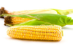 Ears of fresh corn Royalty Free Stock Photo