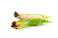 Ears of fresh corn isolated Royalty Free Stock Images