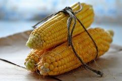 Ears of fresh corn Stock Photography