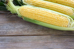 Ears of fresh sweet corn on the boards Royalty Free Stock Photo