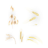 Ears of grain Stock Image