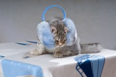Ears and headphones Royalty Free Stock Photography