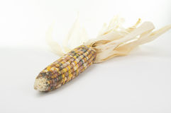 Ears of Indian Corn  on White Background Stock Photos