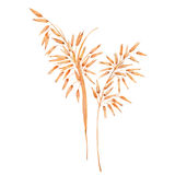 Ears of  oat. Watercolor illustration  on white background Royalty Free Stock Photography