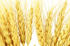 Ears of oats barley rye or wheat Stock Photos