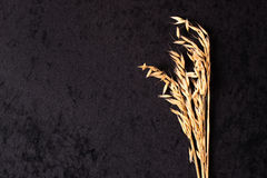 Ears of oats on black. Cloth background Royalty Free Stock Photos