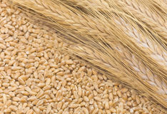 Ears Of Cereals Royalty Free Stock Photos