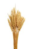 Ears Of Wheat. Royalty Free Stock Photography