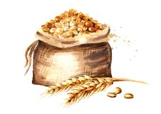 Free Ears Of Wheat And Sack Of Grain. Watercolor Hand Drawn Illustration, Isolated On White Background. Stock Photo - 120245850