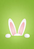 Ears rabbit Royalty Free Stock Photos